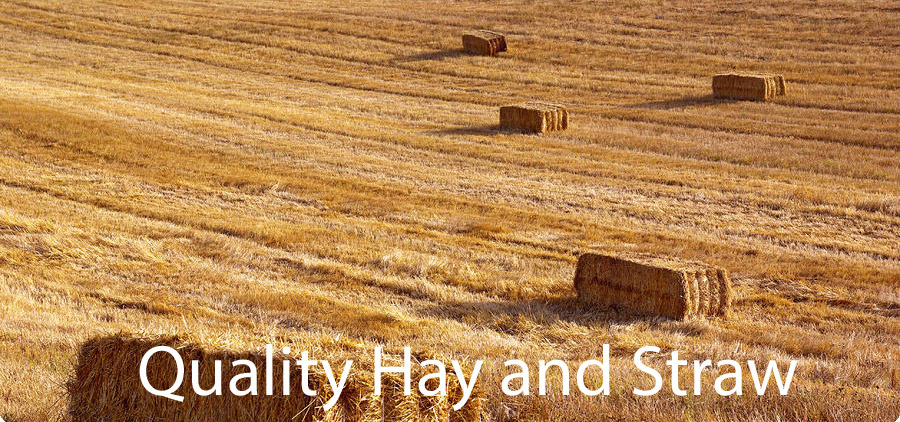 Quality Hay and Straw